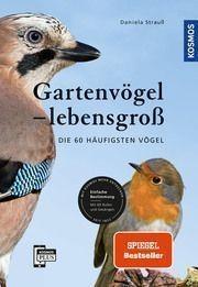 Gartenvögel lebensgroß von Daniela Strauß